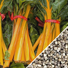 Swiss Chard - Orange