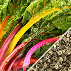 Swiss Chard - Rainbow Mix