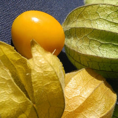Tomatillo - Ground Cherry