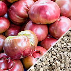 Tomato - Cherokee Purple