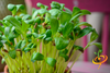 Sprouts/Microgreens - Fenugreek