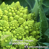 Broccoli - Romanesco Italia