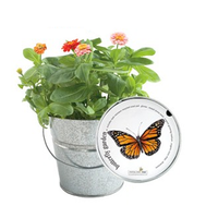 Garden-in-a-Pail (Butterfly)