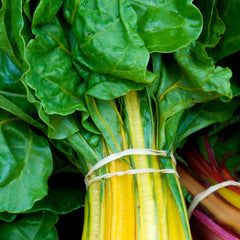 Swiss Chard - Canary Yellow