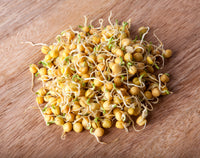 Sprouts/Microgreens - Bean, Garbanzo (Chickpea)