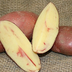 Potato, Fingerling - French Classic (Organic/Heirloom)