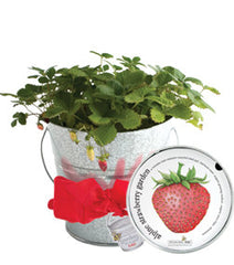 Garden-in-a-Pail (Strawberry)