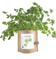 Cilantro Garden-in-a-Bag