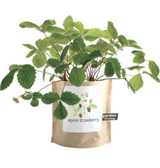 Alpine Strawberry Garden-in-a-Bag