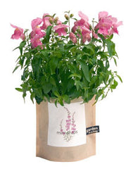 Mini-Snapdragon Garden-in-a-Bag