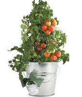 Garden-in-a-Pail (Tomato)