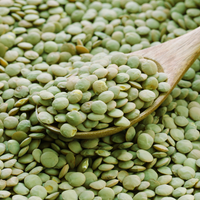 Sprouts - Lentils, Green