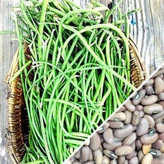 Bean (Pole) - Asparagus Yard-Long