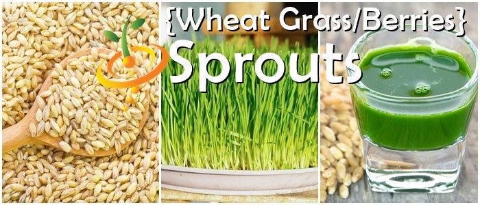 how to eat wheat sprouts