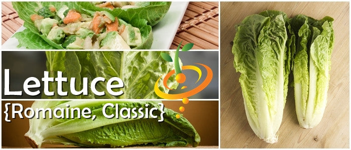 Organic Paris Island Cos Lettuce Seed Approx 300 packed in Eco Friendly Materials