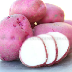 Potato - Red Pontiac (Organic/Heirloom)