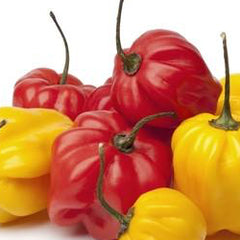 Pepper - Scotch Bonnet, Red