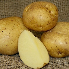 Potato - Yellow Finn (Organic/Heirloom)