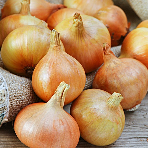 how to grow and harvest onions