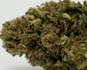 ABRACADABRA - Greenhouse Flower!!  A  Truly heavy TERPENE intoxication!! - Ceiba Botanical Distribution