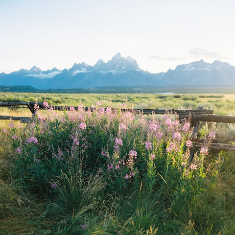 Tetons in Spring