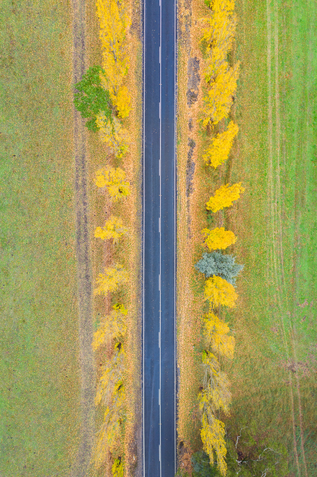 Yellow Road - VIC