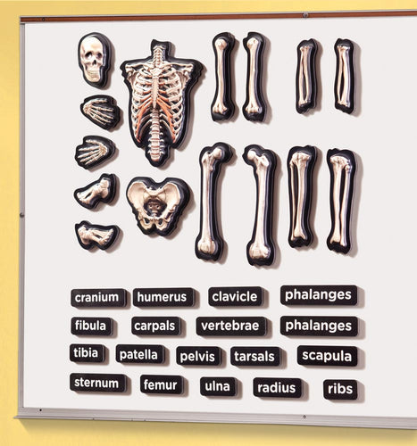 3D Magnetic Skeleton