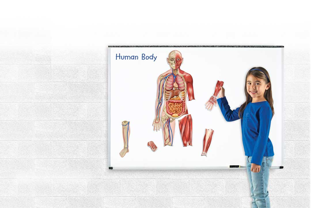 Double Sided Giant Magnetic Human Body Set