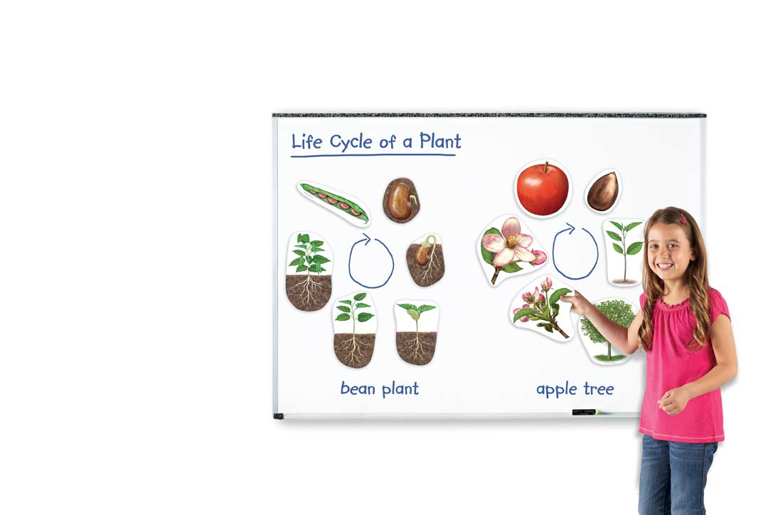 Giant Magnetic Plant Life Cycle Set