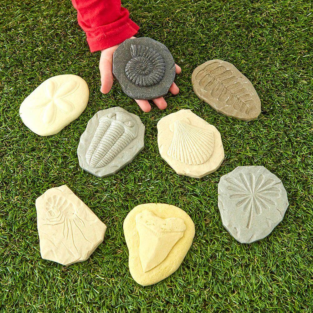 Fossil Discovery Stones 8pk