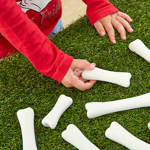 Dinosaur Bones Discovery Count and Size Set