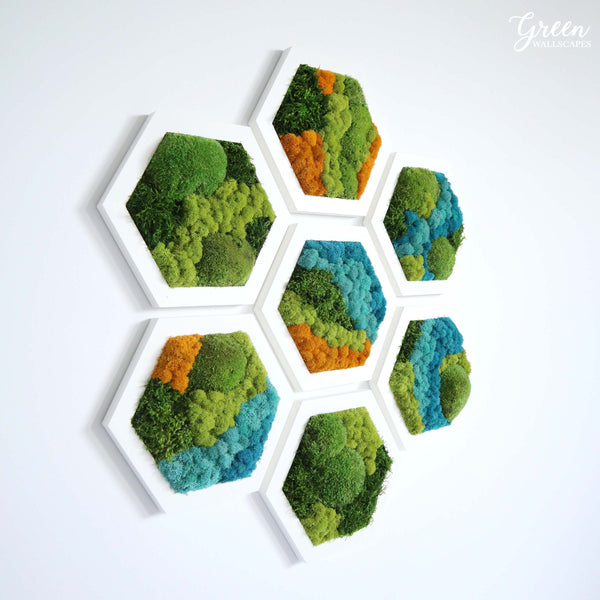 Chromatic Accents Hexagons