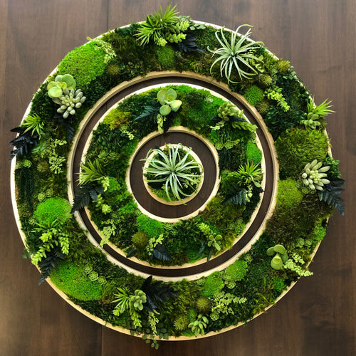 Succulent Wall Planter moss art at its finest. This circle garden will look great in your living room.