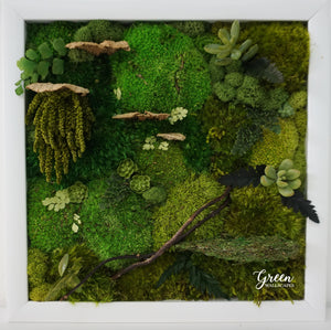 Preserved Moss, Preveserved Fern and Faux succulent art in white frame