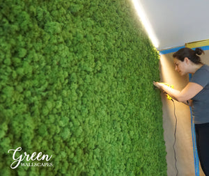This Reindeer moss wall panels make a Great Wall art feature in your office. These panels consist of dried moss and make a Great Wall hanging