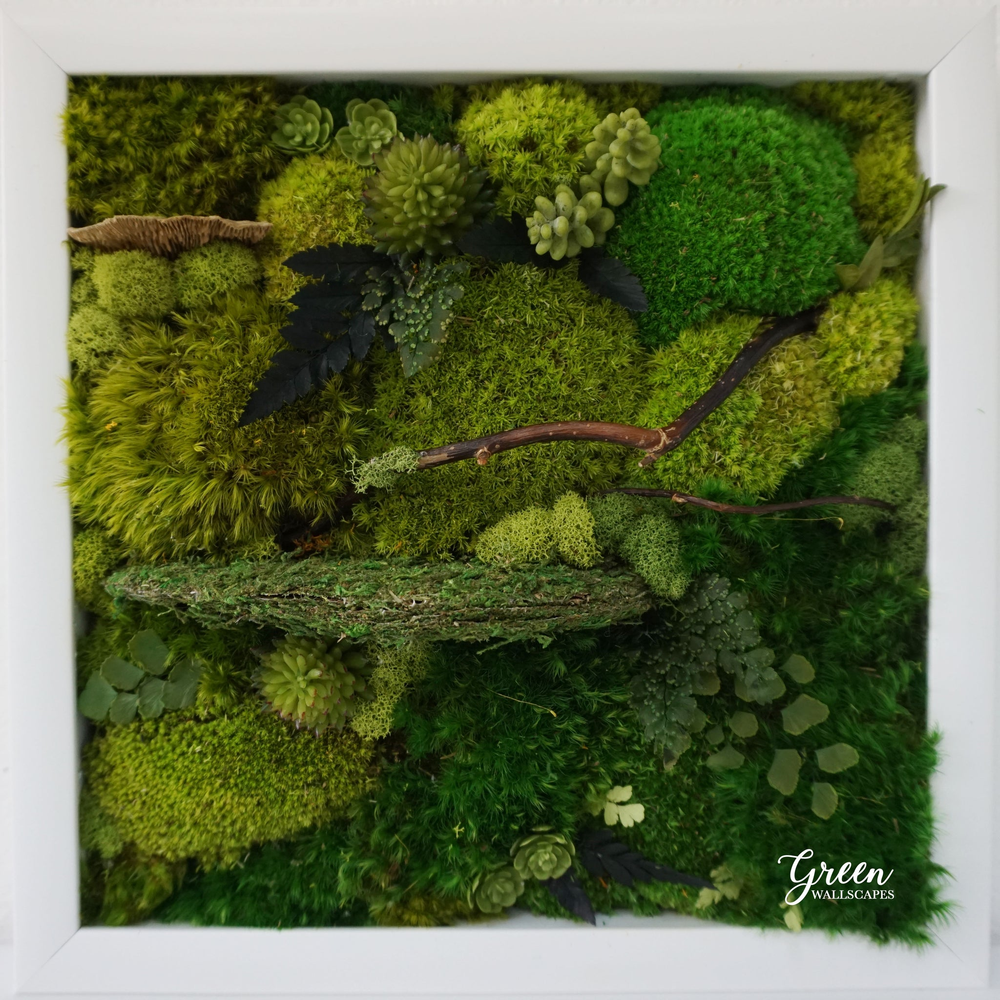 Framed Moss Art Wall Art Framed Art Natural Wall Art Botanical Green Wallscapes