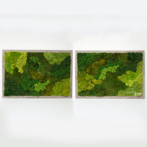 Mixed Mosses Plant Painting - Free Shipping! | Moss wall Art | Preserved Moss Wall | Living Wall | Indoor Moss Wall | Interior Moss Wall |