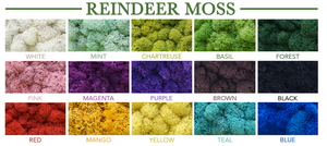 Reindeer Moss Wall - Many Colors Available!  (Please Read the Description)