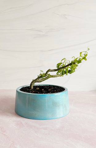 Sustainable Bonsai Planter with Drainage
