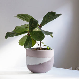 Large Egg Concrete Planter 5.5""