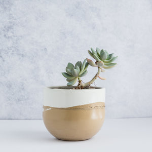"Large Egg Concrete Planter 5.5"" - Two Tone / Apricot Tan"