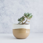 "Large Egg Concrete Planter 6"" - Two Tone / Apricot Tan"