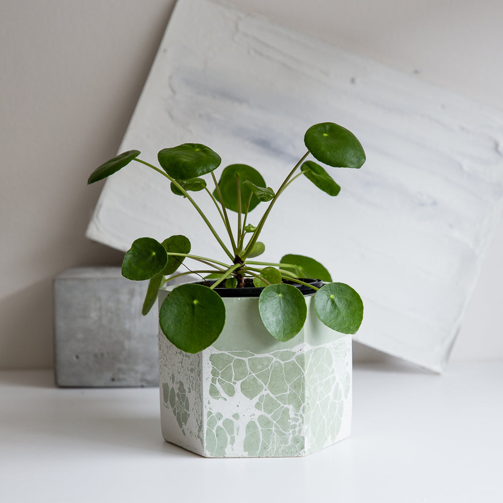 Perfect Imperfect Large Hexagon Concrete Planter - Forest Green