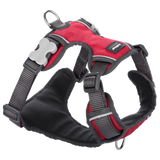 RED DINGO Harness: Padded Harness (5 Sizes, 5 Colours)