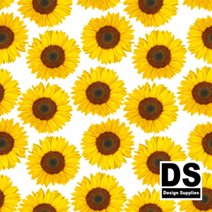 Sunflower White