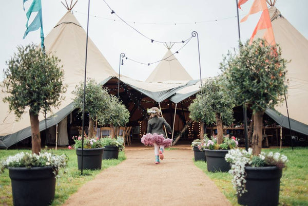 Olive trees wedding