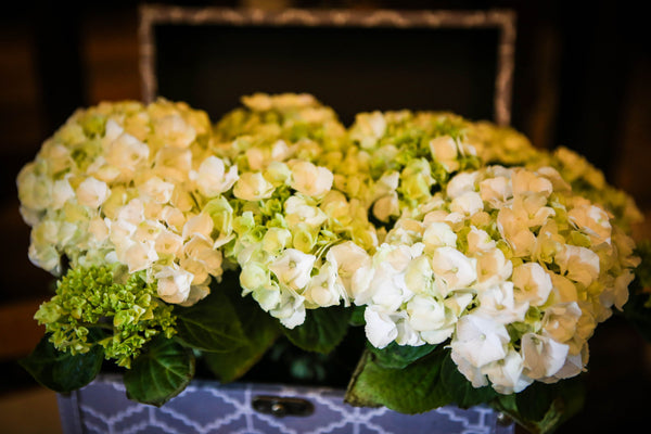 hydrangea table top display