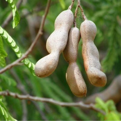7 Health Benefits of Yummy DESi Tamarind