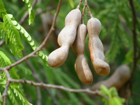 Tamarind - 7 Health Benefits of Yummy DESi Tamarind - GO DESi Imli Pop