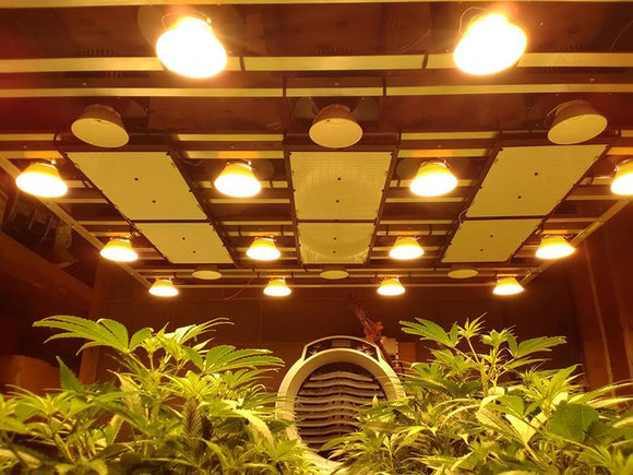 Top 4 Benefits of Using LED Grow Lights in the Cannabis Industry